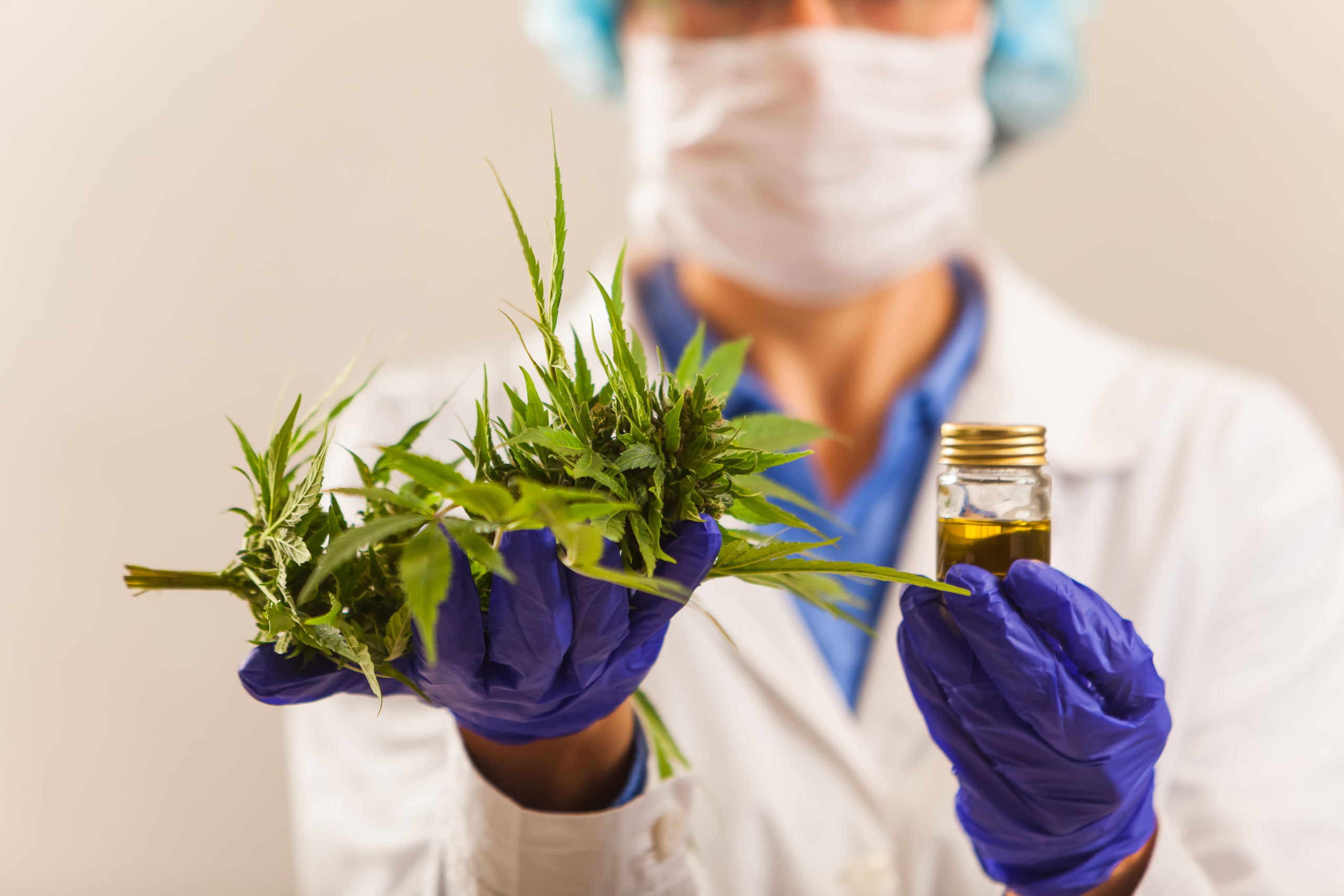 A doctor holds Cannabis used for medical and research purposes. (ElRoi/Shutterstock)